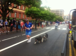 Adorable pups making it to the finish too!