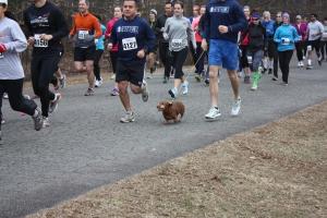 Race Dogs!